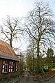 Linden , twee welkomstbomen te Zwalm - 372428 - onroerenderfgoed.jpg