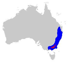 Litoria verreauxii distribution.PNG