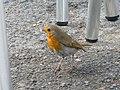Little bird - panoramio.jpg