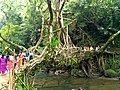 Living Root Bridge, Shillong.jpg