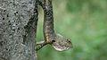 Lizard....jpg