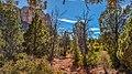 Llama Trail (39316141394).jpg