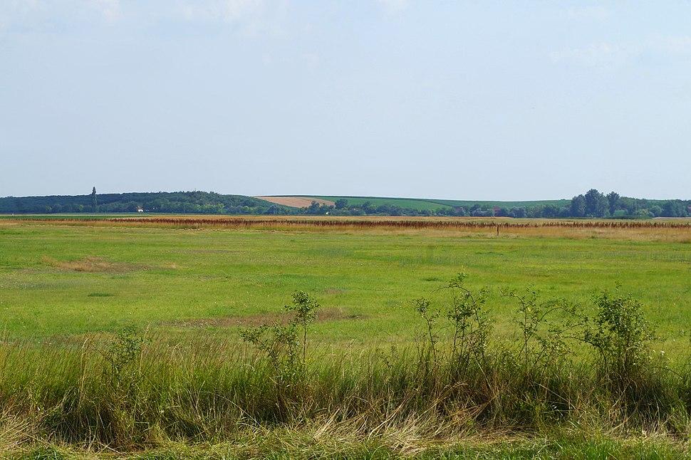 Loess plateau Telečka, eastern side