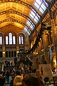 London - Cromwell Road - Natural History Museum XIV.jpg
