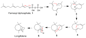 Longifolene - The biosynthesis of Longifolene