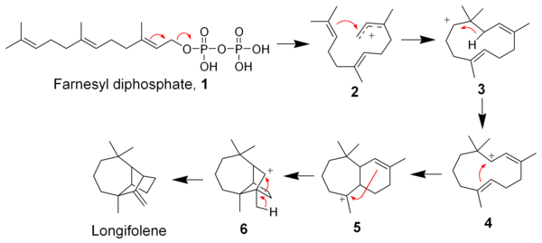 The biosynthesis of Longifolene