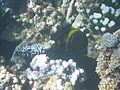 LordHoweIsland NorthBay Reef 29.JPG