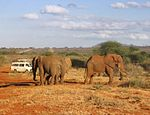 Loxodonta africana group surrounded by game viewer vehicles (edited).jpg