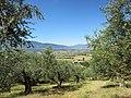 Lungo il sentiero Ferentino Porciano, vista della valle del Sacco - panoramio.jpg