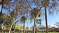 MacArthur Park, Los Angeles, CA, USA - panoramio (11).jpg