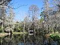 Magnolia Plantation and Gardens - Charleston, South Carolina (8556539846).jpg