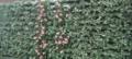 Maia Noorsalu taimevaip Tartus Lõunakeskuses.png