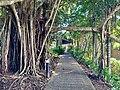 Main Street of Kuranda, Queensland, July 2020, 07.jpg