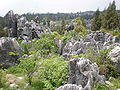 Major Stone Forest NE outer area 1.JPG