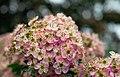Many Flowers (258060079).jpeg