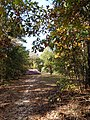 Marion County, AL, USA - panoramio (53).jpg