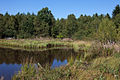 Martel-Hochmoor-2.jpg