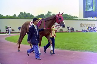 Marvelous Crown Japanese-bred Thoroughbred racehorse