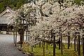 Matsushima (2455298903).jpg