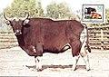 Maxicard 1985 GDR Rind MiNr2965 pm B002a.jpg