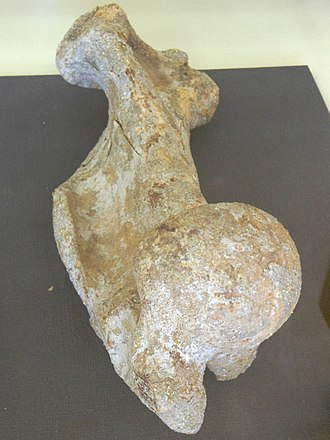 Japanese sea lion - 8,000 year old sea lion fossil