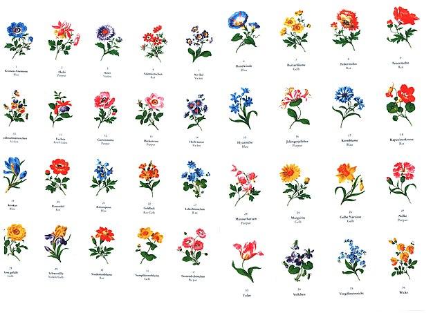 dateimeißenblumenvorlagen  wikipedia