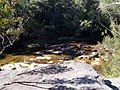 Middle Harbour Track - panoramio.jpg