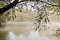 Misty - Stanborough Lakes (33928457926).jpg