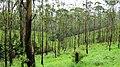 Misty Grass land @ Gavi - panoramio (5).jpg