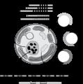 MolecularMarkersSymbiodinium.png