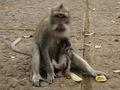 MonkeyForestMotherAndChild.jpg