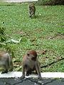 MonkeyinPenangBotanicGarden.jpg