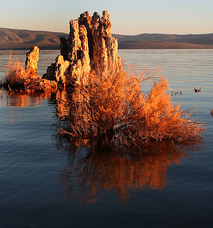 Tufa towers in Mono Lake were exposed by water diversions. Mono lake tufa formation.jpg