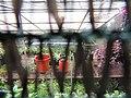 Monte Palace Tropical Garden, Funchal - 2012-10-26 (28).jpg