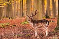 Morning Deer (92789007).jpeg
