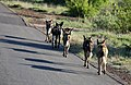 Mosetlha, Madikwe Game Reserve, South Africa (45949774205).jpg