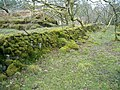 Mossy wall - geograph.org.uk - 145507.jpg