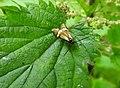 Moth (27330353403).jpg