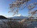 Mount Fuji and cherry blossoms from Ubuyagasaki, Lake Kawaguchi on April 15, 2016.jpeg