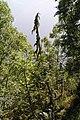 Muldalslia naturreservat 4.jpg