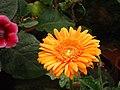 Munnar flower.jpg