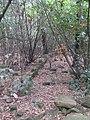 Muro semiseppellito del castello di Tuori - panoramio.jpg