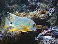 Musee Oceanographique Aquarium.jpg