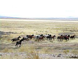 Mustang Utah 2005 2.jpg
