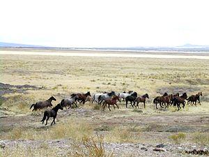 Un troupeau de mustangs, Utah