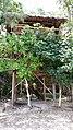 My Treehouse - panoramio.jpg