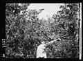 Myrtle at Daphne in fruit. Close up LOC matpc.16698.jpg