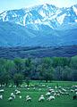 NRCSUT03043 - Utah (6455)(NRCS Photo Gallery).jpg