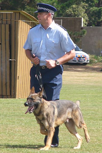 File:NZ Police Dog - Flickr - 111 Emergency.jpg