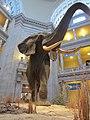 National Museum of Natural History, Washington, D.C. (2013) - 05.JPG